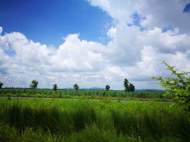 Love green season. Agriculture Field Environmental Conservation Growth Farm Cereal Plant Cloud - Sky Sky Green Color Landscape Rural Scene Outdoors Love Photograph My Cameras