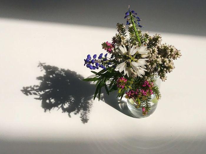 Picked Flowers