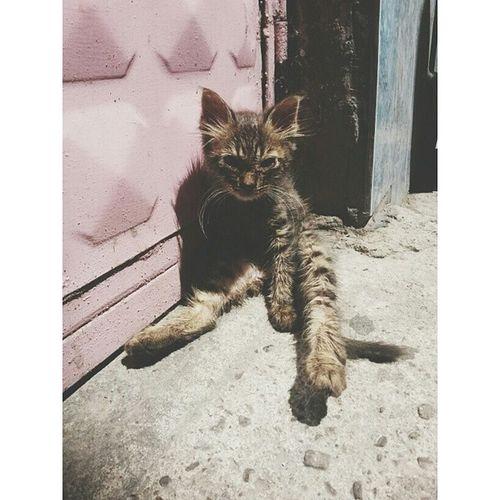 Tipini yerim Cat