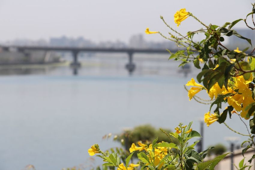 Ahmedabad India Ahmedabad River Front Beauty In Nature Bridge - Man Made Structure City Close-up Day Flower Growth Nature No People Outdoors Plant River Sky Travel Travel Destinations Water EyeEmNewHere