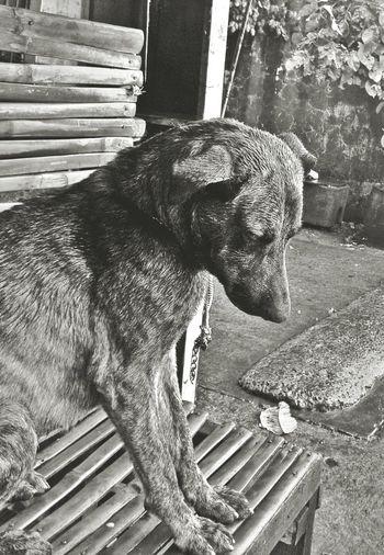 Blackandwhite Dogslife Alone Feeling Down Eyem Philippines