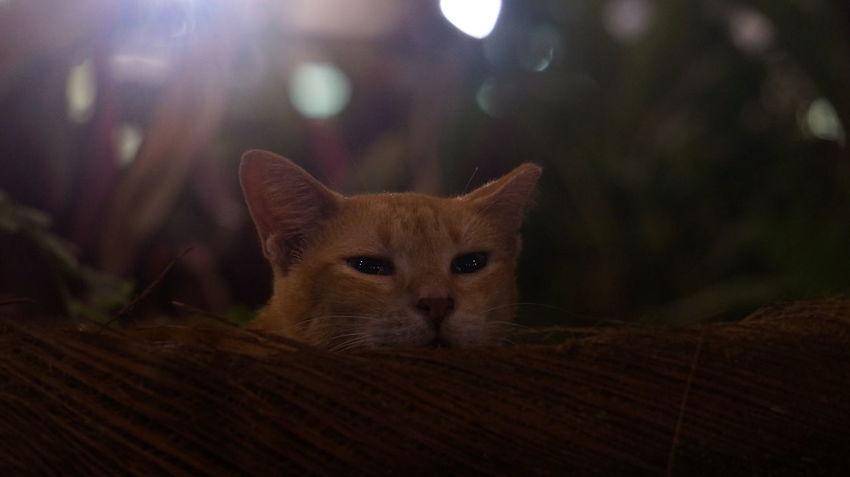 Kot Katze Gato Gatto Cats Cats Of EyeEm Cats 🐱 Cat Lovers Cat♡ Cat Cat Photography Chat Meow Meow🐱 Neko Stray Cat 野良猫 猫 貓