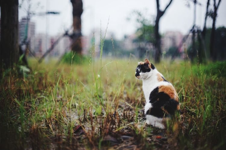 Cat sitting on field