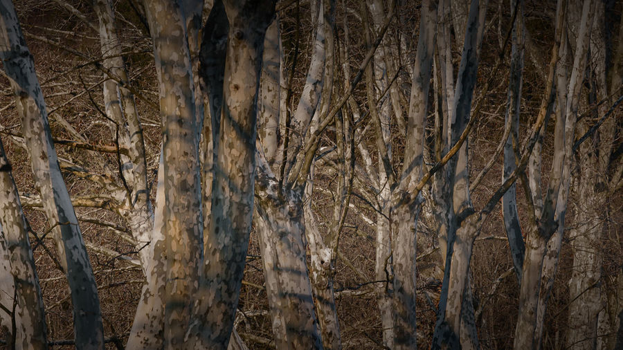 Backgrounds Branches Close-up Day Forest Full Frame Nature No People Outdoors Sidelight SideLightPhotography Textured  Trees