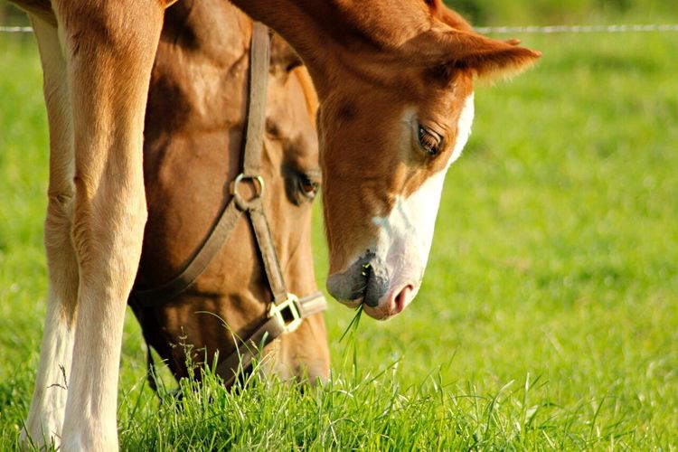 Grass Animal Themes Grazing Horse Mother And Son