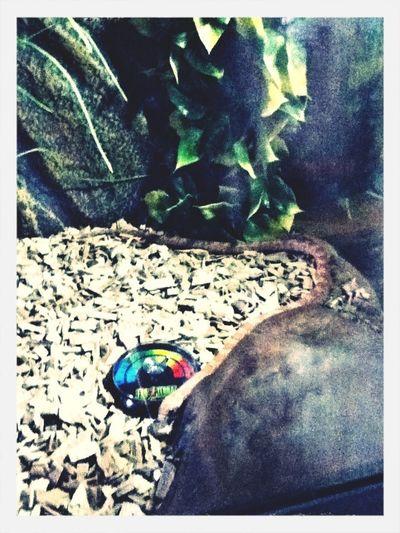 Serpent/ballade