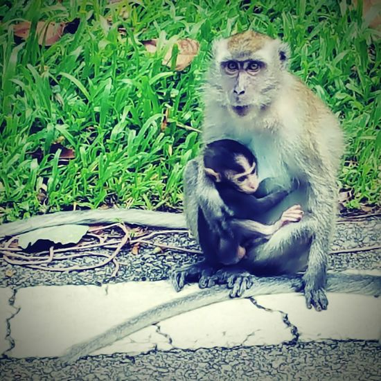 Motherhood My Freetime ! Planet Of The Apes Monkeys