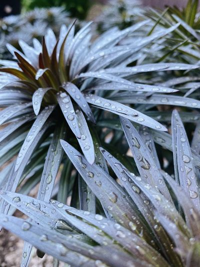 Close-up of wet plant leaves during winter