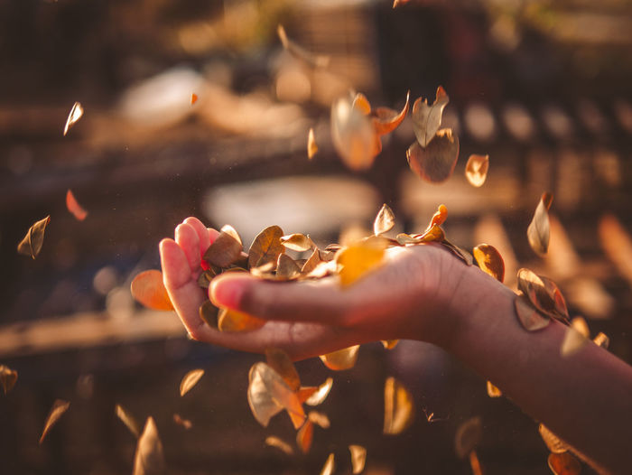 Close-up of woman hand throwing leaf in air outdoors