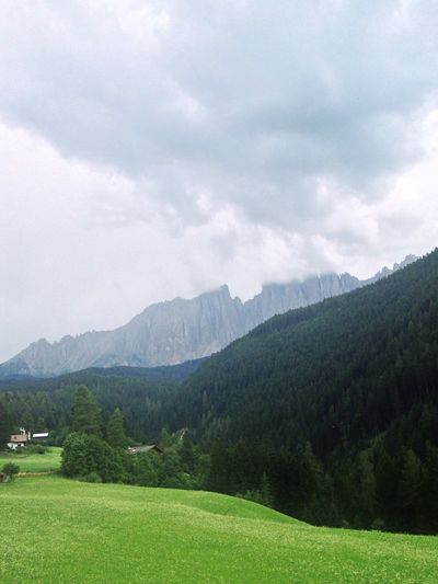 201/365 July 20 One Year Project 2017 Latemar Dolomites Grass South Tyrol Trentino Alto Adige Italy Mountain Sky Nature Tranquility Landscape Grass Beauty In Nature No People Day Tree Outdoors
