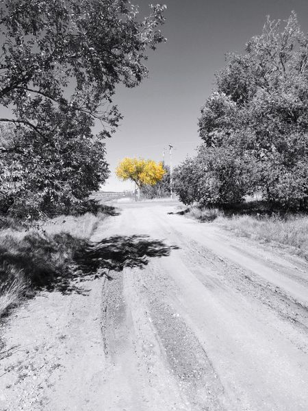 """Rural Autumn Splash"" Out in the high desert of Central New Mexico we unfortunately don't get much Autumn color so it's a real treat when one comes across a splash of Autumn in the often bleak rural landscape. Autumn Autumn Colors Rural Roads Rural Rural Scenes Rural America RuralTreasures  Rural Landscape Ruralphotography Selective Color"