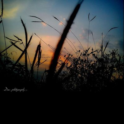gandum & rerumputan pun seakan menari seirama terbitnya sang Surya, -------------------------------- Westjava Sonyxperiaid Sunset Sunrise_sunsets_aroundworld silence sonyphotography shadows summertimeshine thebestshooter thebest_capture yellow icc_sunset ig_indonesia_bnw instagallery_ina instagramindonesia amazingnusantara darkness xperianesia visit_indonesia_tourism night mobile_perfection