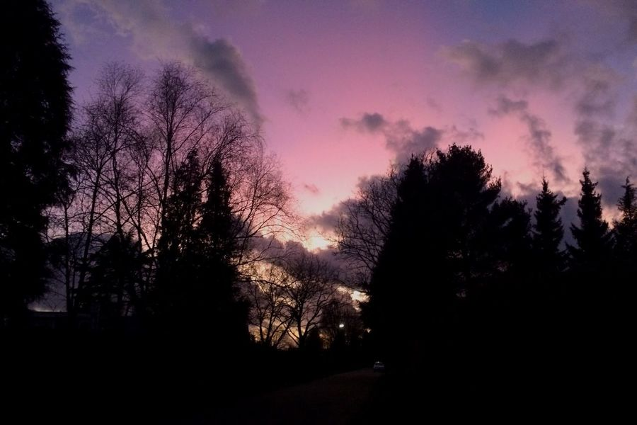 Sky Sunset Colors Colorful Showcase: February Goodnight Taking Photos Enjoying Life Iphone5s IPhoneography Silouette & Sky Silhouette Trees Purple Pink Sky Parelmoerwolken Pastel Power Original Experiences
