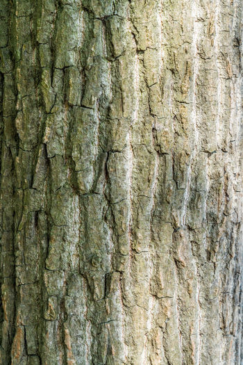 Bark texture Backgrounds Bark Nature Open Air Outdoors Plant Rough Texture Structural Tree Textured  Tree Trunk Wood Textured  Full Frame Tree Trunk Close-up Pattern No People Rough Plant Bark Day Natural Pattern Beauty In Nature Abstract Weathered Wood - Material Textured Effect Abstract Backgrounds