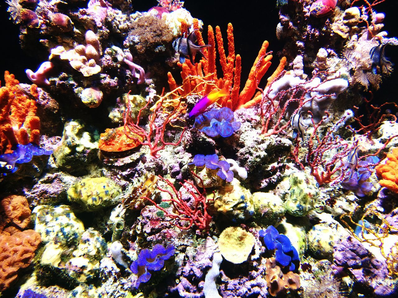 underwater, coral, sea life, no people, multi colored, nature, water, undersea, animal themes, beauty in nature, animals in the wild, swimming, outdoors, day, close-up, aquarium