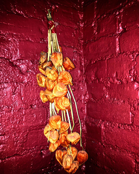 Wallflowers Close-up Creativity Dry Flower No People Orange Color Red Still Life Textured  Wall
