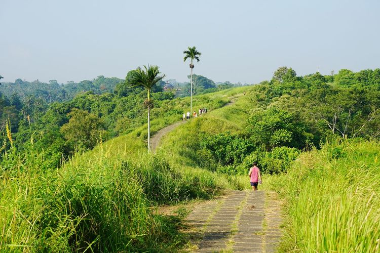 Ridge walk at Campuhan, Bali Hill Landscape_Collection Wallpaper Backgrounds Walking Campuhan Ridgewalk Ubud Landscape Landscape_photography Bali, Indonesia Nature_collection Baliphotography Nature Rear View Walking Beauty In Nature Green Color Tranquil Scene Clear Sky Leisure Activity Scenics Sky People