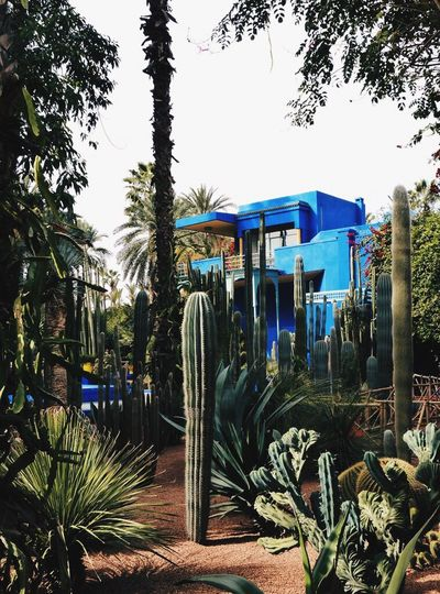 My Best Photo 2014 Marrakech Jardin Majorelle Garden