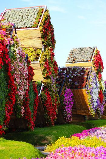 Flowers In Boxes! Flower Nature Built Structure Architecture Growth Beauty In Nature Day Tree Freshness Sunlight No People Plant Outdoors Grass Sky DubaiMiracleGarden EyeEmNewHere Art Is Everywhere