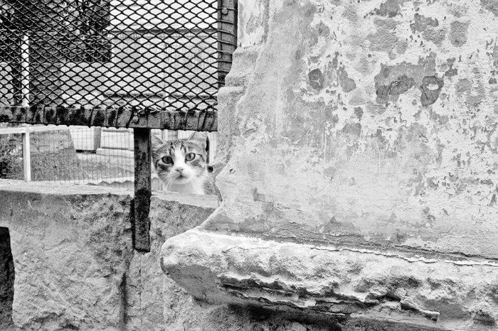 More on https://www.facebook.com/leccecomelacantoio/ Pets Cat Animal Themes Domestic Animals Looking At Camera Streetphotography Bnw_of_our_world Black & White Bnwmood Bnw_captures Blackandwhitephotos Black And White Bnw Photography Blackandwhitephotography Lecce - Italia Lecce (Italia) Lecce B/w Leccecomelacantoio Lecce City Bnw Blackandwhite Blackandwhitephoto Lecce Bnw_life Bnw_collection