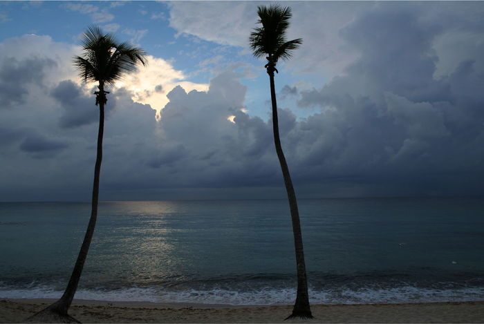 2007 Dominican Republic Dominicus Beach Beach Beauty In Nature Day Horizon Over Water Nature No People Outdoors Palm Tree Scenics Sea Sky Sunset Tree Trunk Water