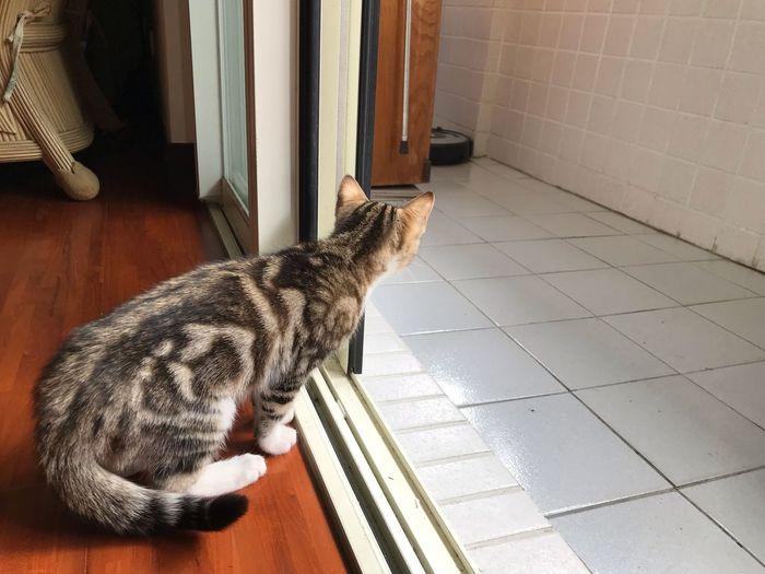 EyeEm Selects One Animal Domestic Animal Themes Pets Domestic Animals Vertebrate Animal Mammal Cat Feline Domestic Cat Indoors  No People Flooring Home Interior Tile Day