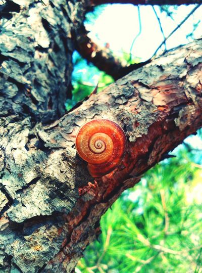 ...🎵🎼 treu banya puja a la ... Animal Themes One Animal Snail Tree Trunk Wildlife Tree Animals In The Wild Nature Fragility Beauty In Nature Personal Perspective Tree Trunk Nature Wakinthewoods Snails🐌 Cargols Natural Condition Tree_collection  Strange Forms Of Nature Snail🐌 Snail Collection Snail ❤
