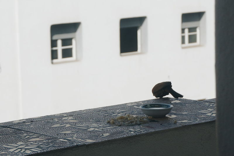 Bird perching on a building