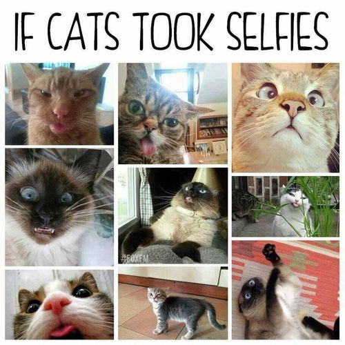 Funny Faces รักแมวเหมือนเก๊าเยยย