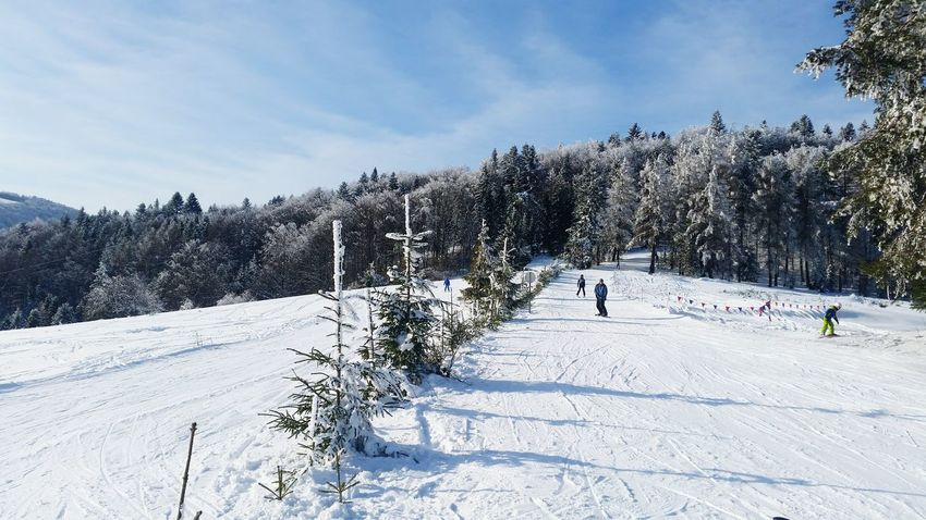 Snow Winter Cold Temperature Tree Outdoors Winter Sport Nature Pinaceae Day Pine Tree Ski Holiday Sky Vacations Sport Landscape Snowboarding Beauty In Nature People