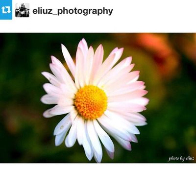 Instafitit Flowers Nature EyeEm Best Shots