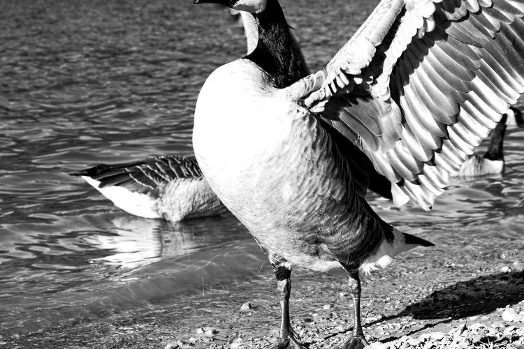 Seagulls flying at lakeshore