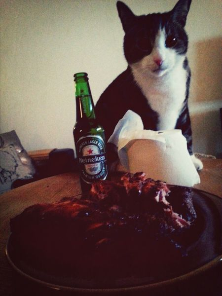 """Meat, beer, my cat and hockey. I'm happy!!!! But wishing my dear friend would be with me. Now she lives in """"beerheaven"""" Beer Watching Hockey Heineken #Beer My Cat"""
