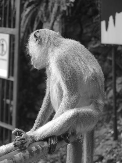 Monkey relaxing on railing