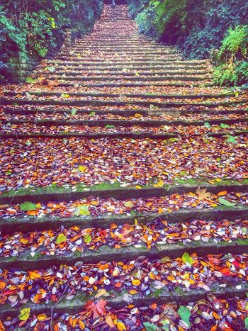 Steps Stairs Autumn Leaves