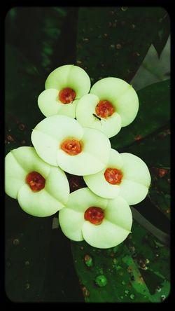 White Flower EyeEm Nature Lover Beautiful Flowers Mizz Nunuy