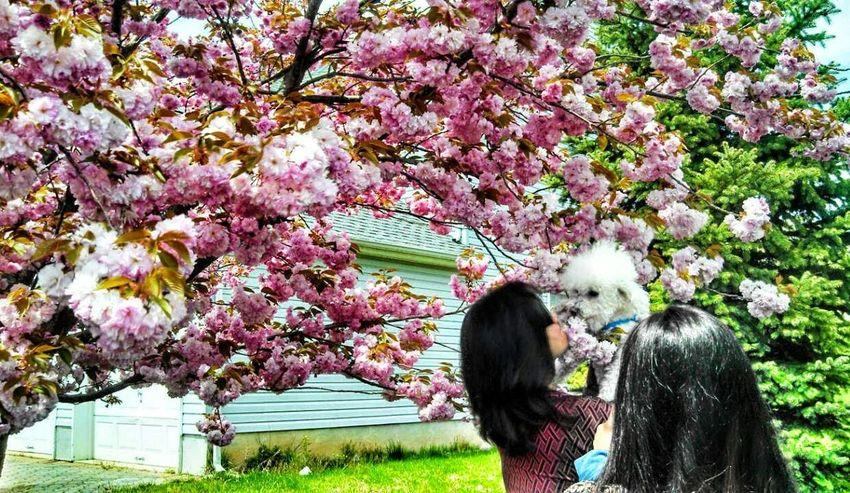 Cherryblossom Doggy Love Flowers Hello World