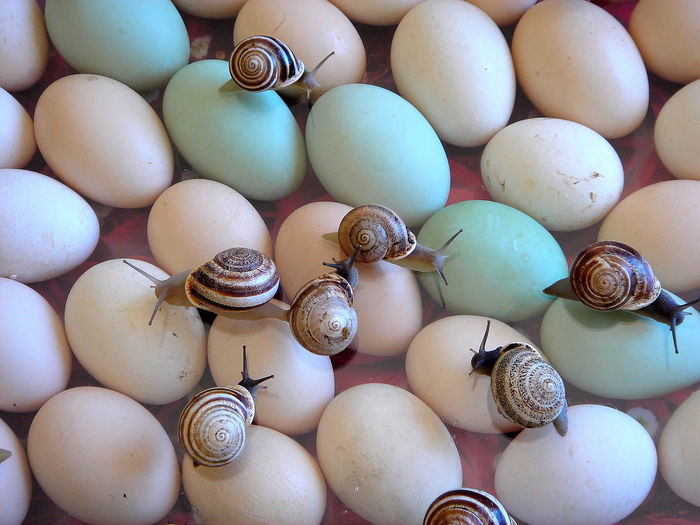 Backgrounds Celebration Close-up Day Easter Egg Carton Escargot Food Food And Drink Freshness Full Frame Healthy Eating Large Group Of Objects No People Oeufs Outdoors