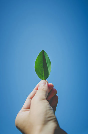 Close-up of hand holding leaf against clear blue sky