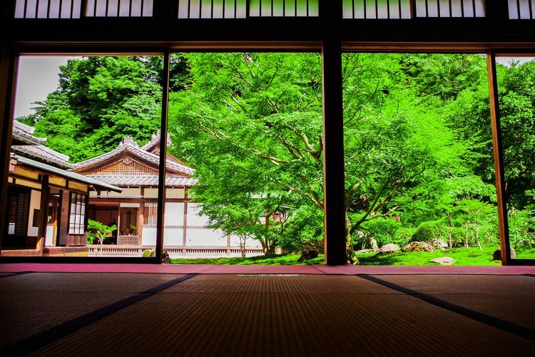 Japan Kamakura Tree Window Architecture Built Structure Building Exterior Sky Green Color