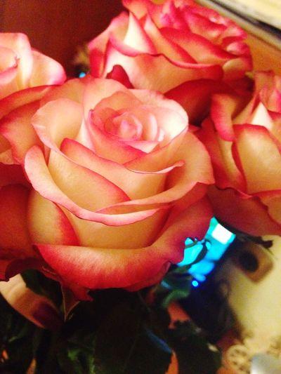 Roses Flowers Birthday Follow Followme Followback Follow4follow Followforfollow Like4like Taking Photos