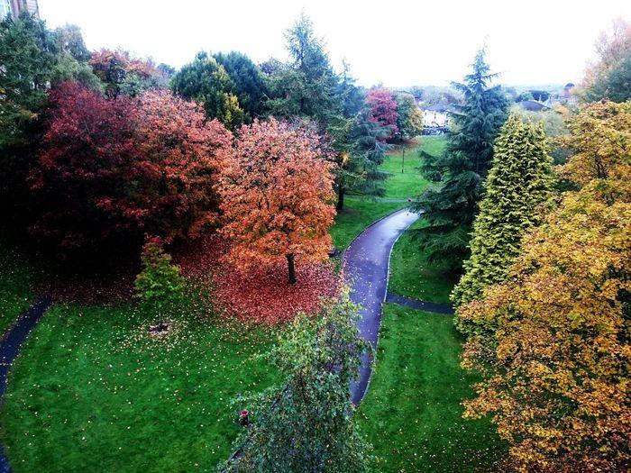 Autumn Leaves Treescollection Autumn🍁🍁🍁 Walking Around Eye Em Scotland
