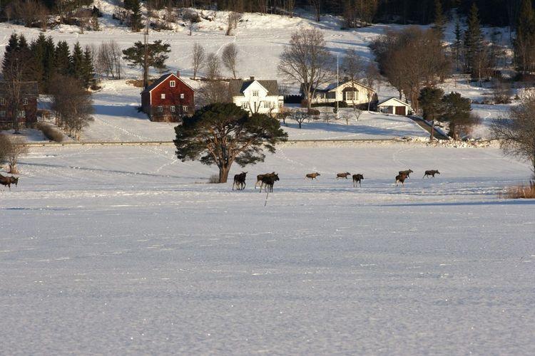 Moose Running On Snowy Field During Winter