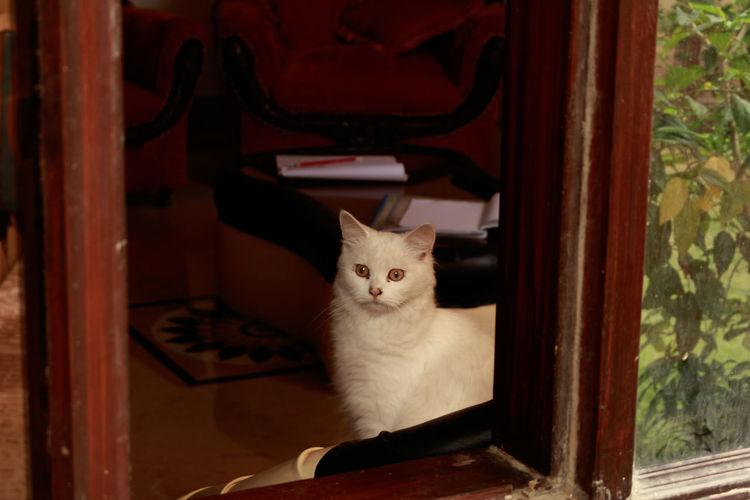 Portrait of cat sitting on red floor