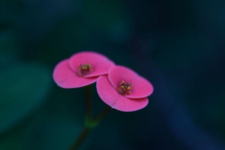 花 ガーデニング NIKON D5300 植物園 冬
