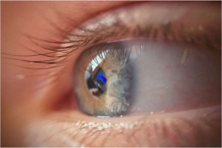 Eyelash Human Eye Sensory Perception Eyesight Human Body Part Eyeball Real People One Person Iris - Eye Macro Reflection Iris Vision Close-up Full Frame Indoors  Day People Kris Demey Photography The Still Life Photographer - 2018 EyeEm Awards