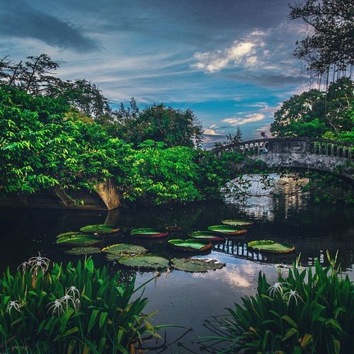 . เราจะคิดถึง คนที่สำคัญ ..... เมื่อต้องจากกันไป เราจะคิดถึง วันที่สวยงาม ....... เมื่อเวลาผ่านไป . . . . . 25 hours Fujifilm_xseries Fujifilm Fujiclub Xm1 Fujifilmthailand Park Garden Ig_bangkok BKK Igersworldwide Igersthailand Siamthai_ig Loves_united_thailand Loves_siam Ig_worldclub Ig_captures Naturelovers Icu_thailand Ig_thailand Thailand_allshots Thaistagram Path Bridge Capture_today Cool_capture_ adayinbangkok adayinthailand walkwaywhy insta_thailand insta_global