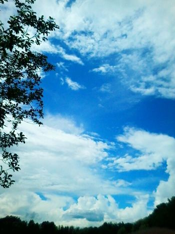 Schöner himmel Cat Wood Friends Nature Natur Blackandwhite Kitty Sky Animal Love Sweet Eye Shadow Girl Model Hello Photography World Sunny Check This Out Wonderful Naturelovers Little Plants🌿 Cloudy Weather⛅☁ Blue Sea...