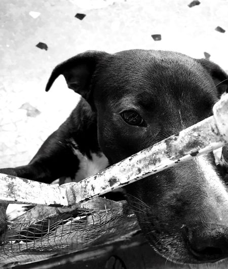 Pet Portraits Mary Animal Themes Dog Domestic Animals Blackandwhite Throughthedoor Throughmyeyes Pets Close-up Beauty