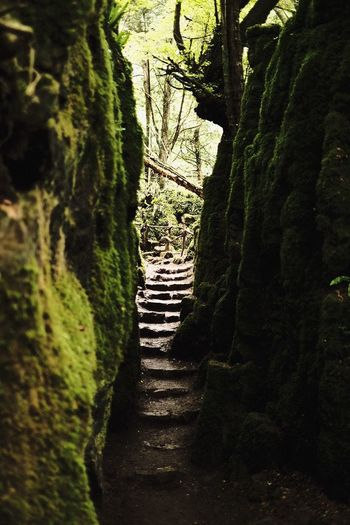 Tree The Way Forward Growth Tranquil Scene Nature No People Day Tree Trunk Beauty In Nature Outdoors Sky Puzzlewood